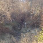 Wildlife at Golden Krone Transylvania Resort