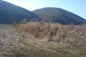 Salty Mud SPA Base of Golden Krone Transylvania Resort